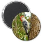 Red bellied Woodpecker Bird Magnet