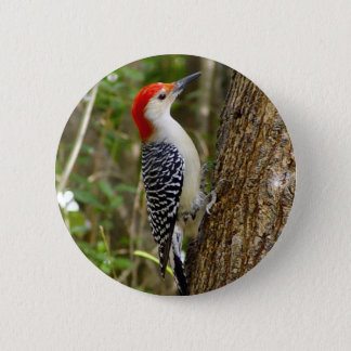 Red Bellied Woodpecker Button
