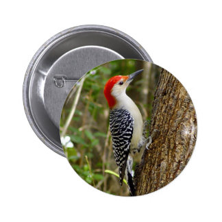 Red Bellied Woodpecker Button