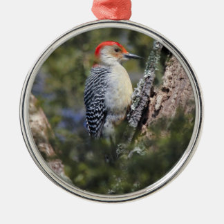 Red-bellied Woodpecker Christmas Tree Ornaments