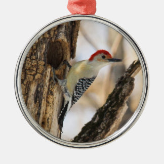 Red-bellied Woodpecker Christmas Ornaments
