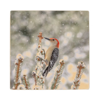 Red-bellied Woodpecker in the snow Wood Coaster