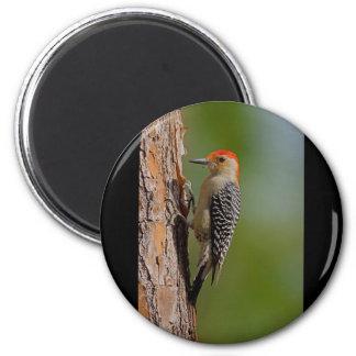 Red-bellied Woodpecker Fridge Magnet