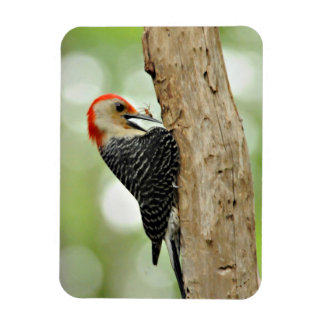 Red-Bellied Woodpecker Rectangular Photo Magnet