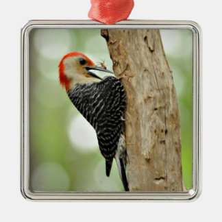 Red-Bellied Woodpecker Silver-Colored Square Decoration