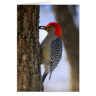 Red-Bellied Woodpecker With Seed Card