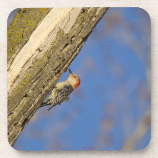 Red-bellied woopecker in tree drink coaster