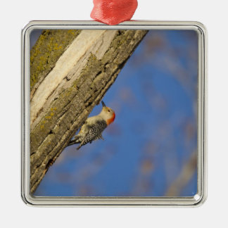 Red-bellied woopecker in tree Silver-Colored square decoration