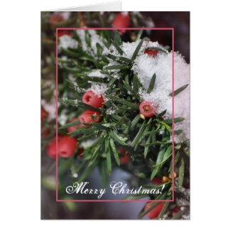 Red berries and snow Christmas Greeting Card
