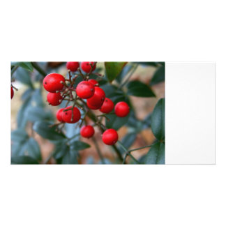 Red Berries Photo Cards