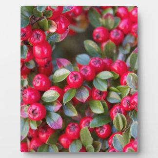 Red Berry photograph Christmas Red Berry Plaque