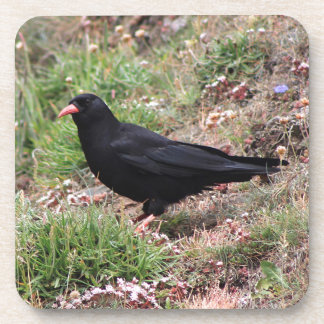Red-billed chough beverage coasters