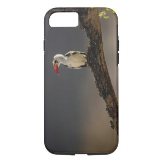 Red-billed Hornbill, Tockus erythrochynchus, iPhone 8/7 Case