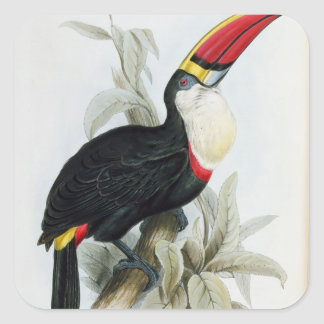 Red-Billed Toucan, from 'A Monograph of the Rampha Square Sticker