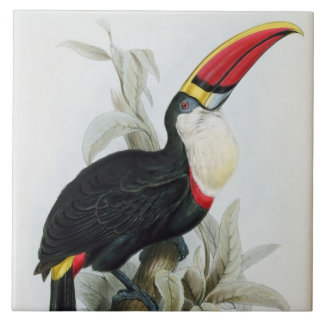 Red-Billed Toucan, from 'A Monograph of the Rampha Tile