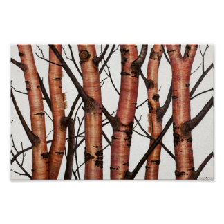 red birches poster
