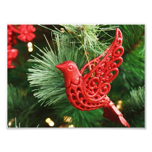 Red bird ornament art photo
