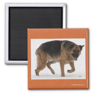 Red & Black German Shepherd - Ranch Dog Lover Square Magnet