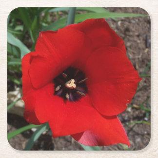 Red & Black Tulip paper coaster, round or square Square Paper Coaster