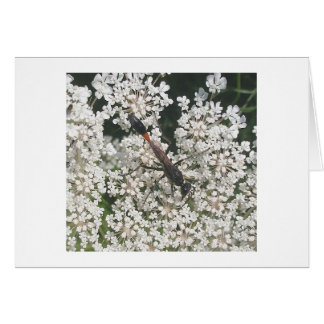 Red & Black Wasp Note Card