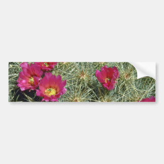Red Blooms On Cactus flowers Bumper Stickers