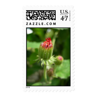Red Blossoming Flower Stamp