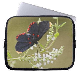 Red-bordered Pixie on white brush Laptop Computer Sleeve