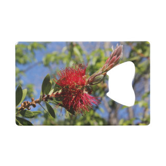Red Bottlebrush Flower Credit Card Bottle Opener
