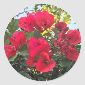 Red Bougainvillea Flowers Classic Round Sticker