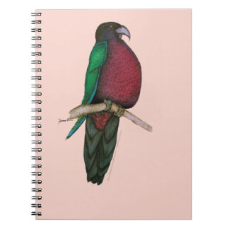 red breasted parrot, tony fernandes spiral notebook