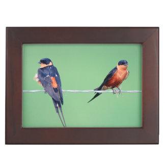 Red-Breasted Swallows (Hirundo Semirufa) Keepsake Box