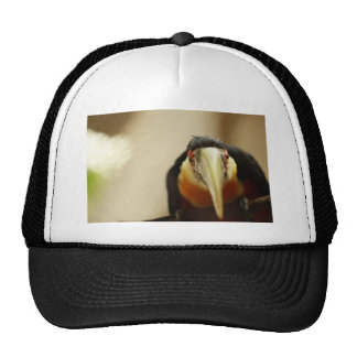 Red-breasted Toucan Cap