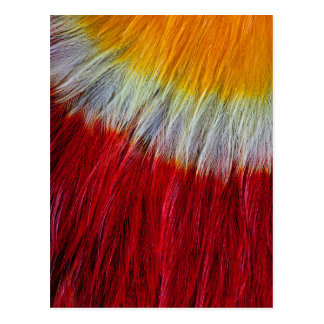 Red Breasted Toucan Feather Abstract Postcard