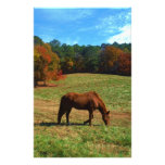 Red Brown horse, fall trees, blue skies Customized Stationery