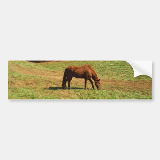 Red  Brown horse, Teal Blue sky Bumper Sticker