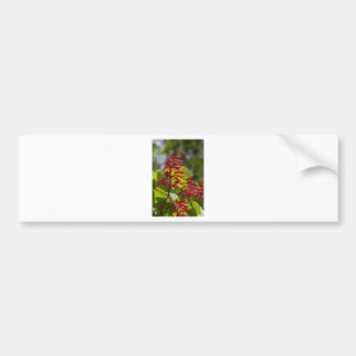 Red Buckeye Wildflowers - Aesculus pavia Bumper Sticker