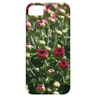 Red Buds iPhone 5 Cover