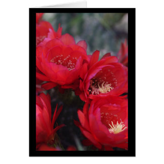Red cactus bloom card