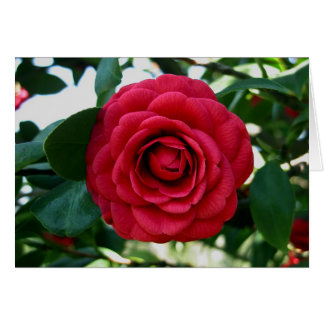 Red Camellia Card