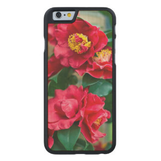 Red Camellia Carved® Maple iPhone 6 Case
