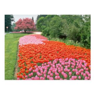 Red Canadian Tulip Festival Experimental Farm Ot Post Card