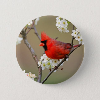 Red Cardinal 6 Cm Round Badge
