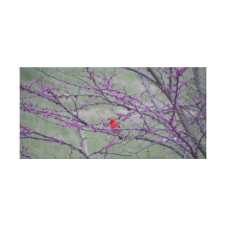 Red Cardinal in Eastern Red Bud Tree Canvas Print