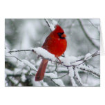 Red Cardinal in the Snow Card