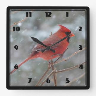 Red cardinal in Winter Square Wall Clock