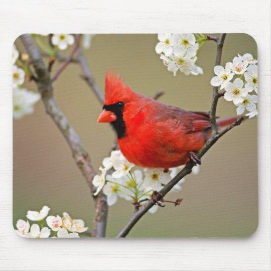 Red Cardinal Mouse Mat