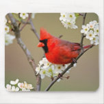 Red Cardinal Mouse Pads