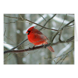 Red Cardinal Side View(Male)Card Note Card