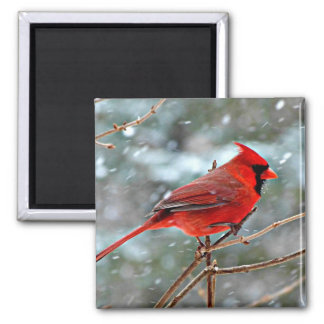 Red Cardinal Square Magnet