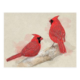 Red Cardinals Postcard